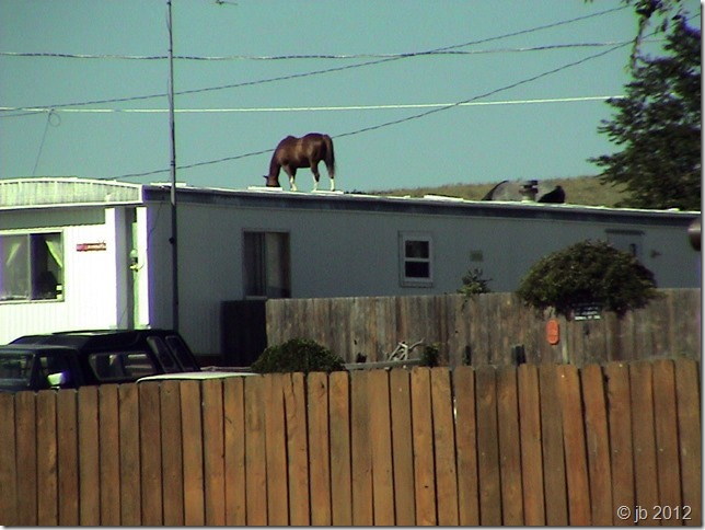 Horses on roof Cheyenne,Wy copy